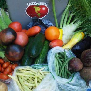 овощи ЮАР оптом